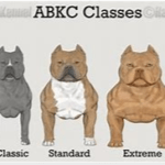 American Bully Size Chart