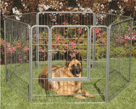 Large Dog in Pen