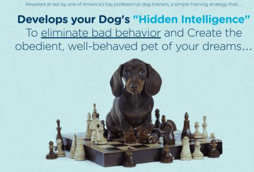 Brain Train Your Dog