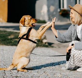 Dogs happy