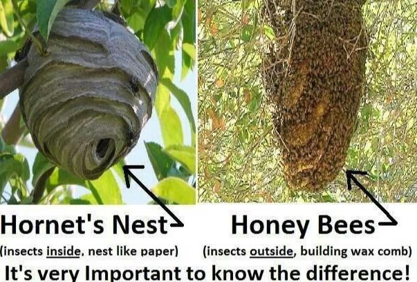Bees VS Wasps